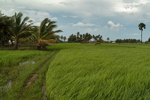 Bellos paisajes de arroz