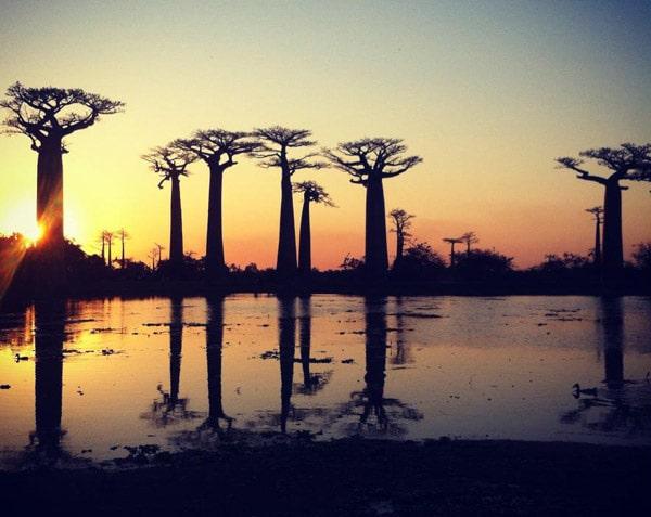 Avenida del baobab al atardecer
