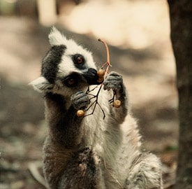 Diario de viaje Madagascar 18