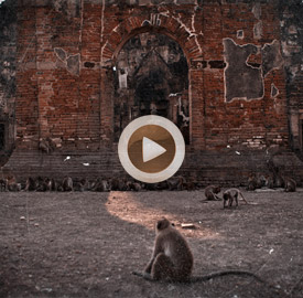 Vídeo 9 Tailandia