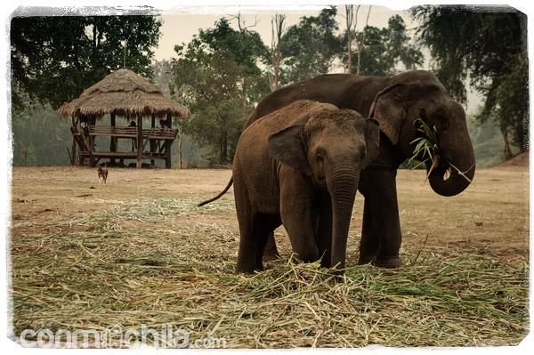 Elefantes de elephat's world