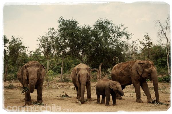 Más elefantes