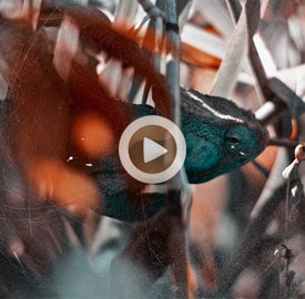 Vídeo 45 Madagascar