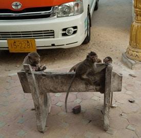 Lopburi la ciudad de los monos