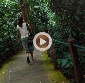 Vídeo 9 Singapur