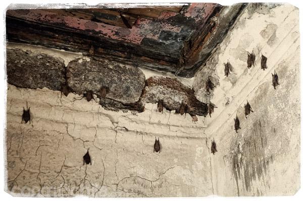 Los murciélagos del interior