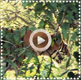 Vídeo 3 viaje a India 2013