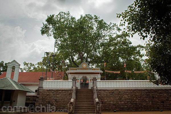 Vista del árbol milenario