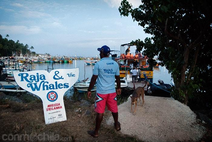 Raja & the Whales