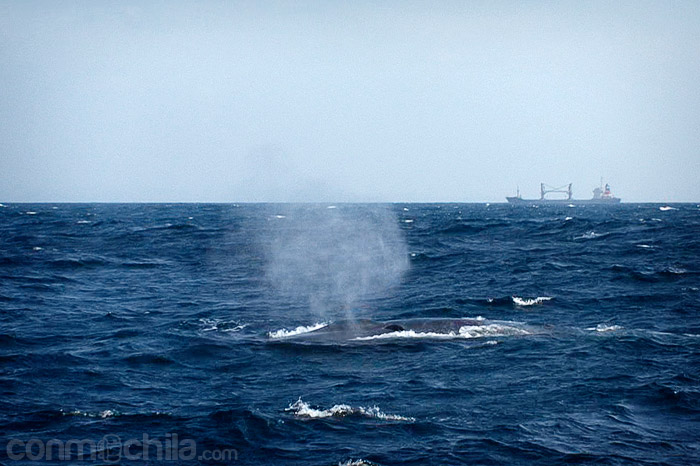 Otra toma de la ballena