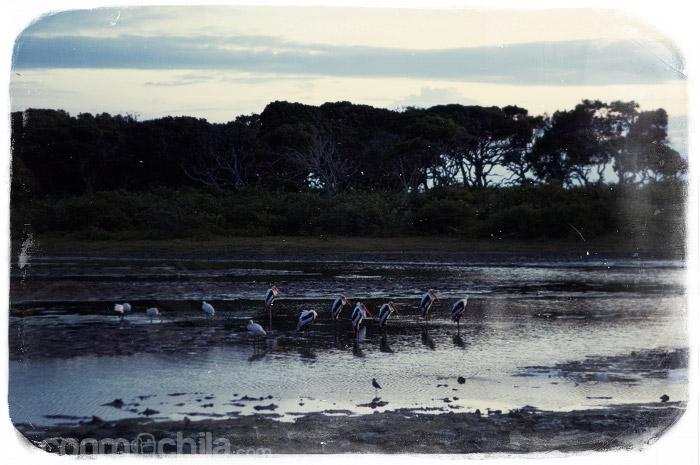 Aves en el lago al amanecer