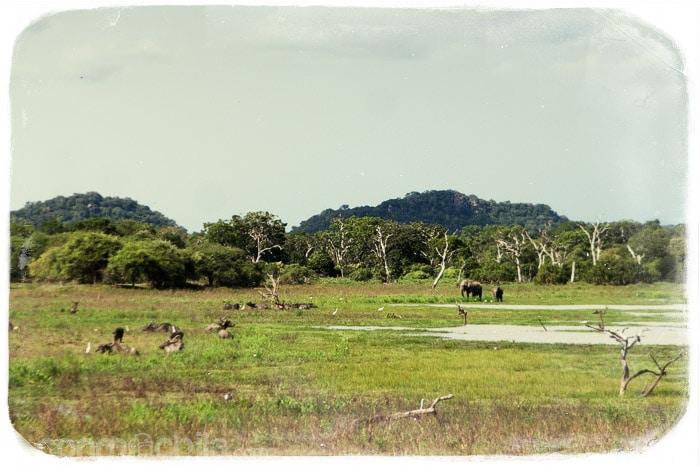Elefantes en la llanura