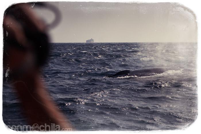 La gran ballena azul