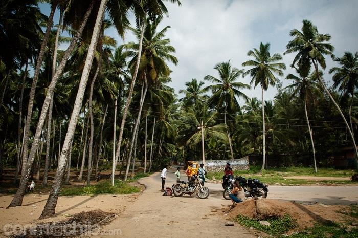 """El """"parking"""" de cocoteros al lado de una de las playas"""
