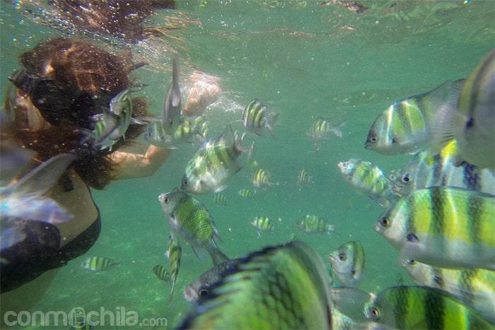 Rodeada de peces