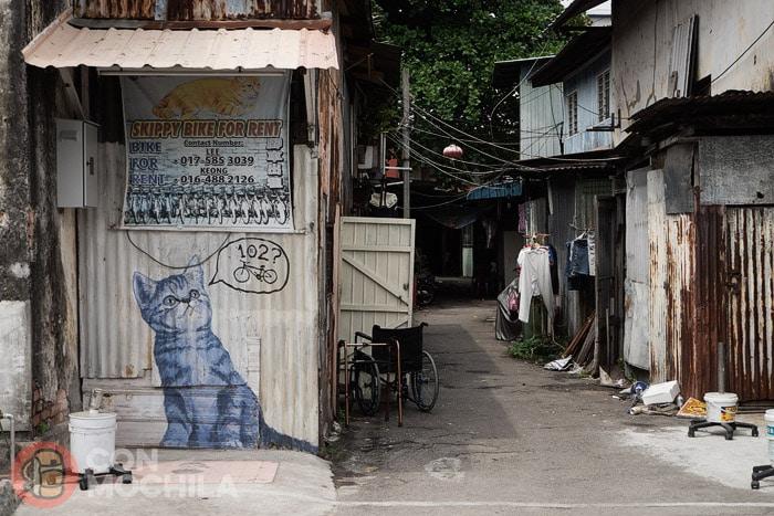 En cualquier esquina puedes encontrar un gato