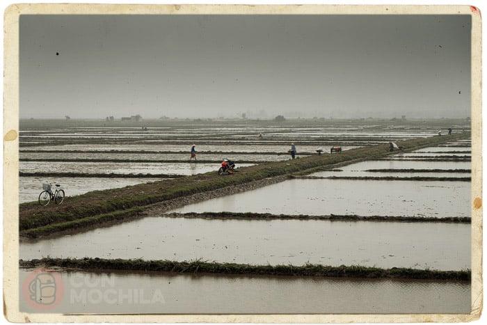 Los campos de arroz anegados de agua