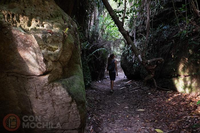 Dentro de la jungla