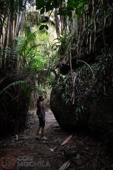 Más jungla