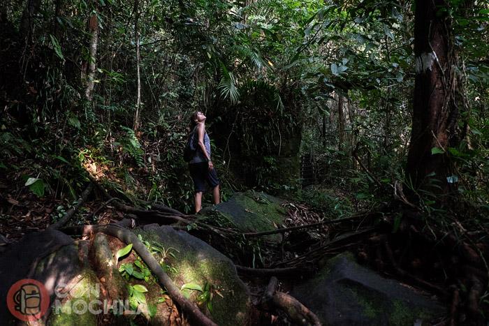 ¿Había dicho que íbamos por la jungla?