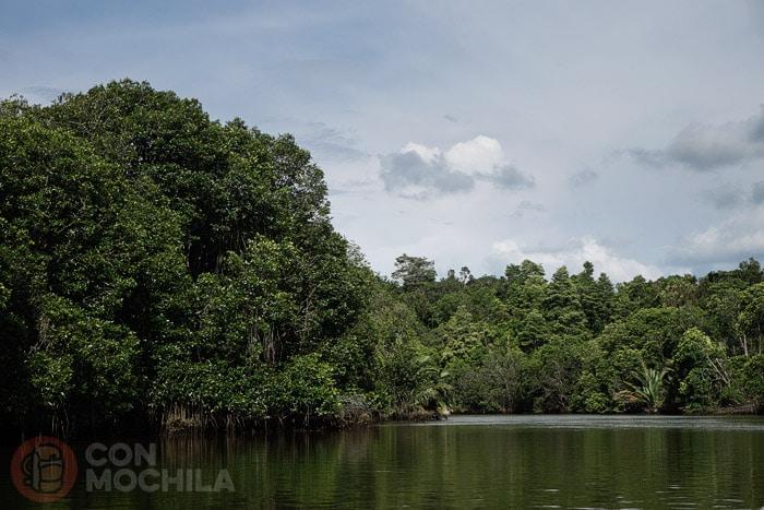 Camino del manglar