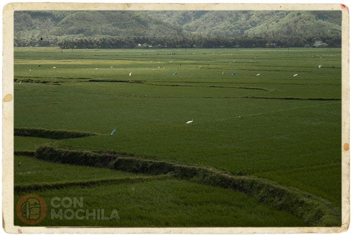 Campos de arroz por allá