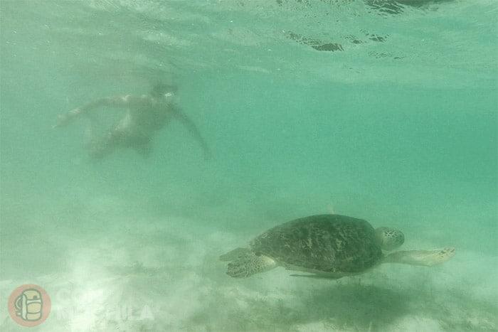 ... o ver tortugas marinas