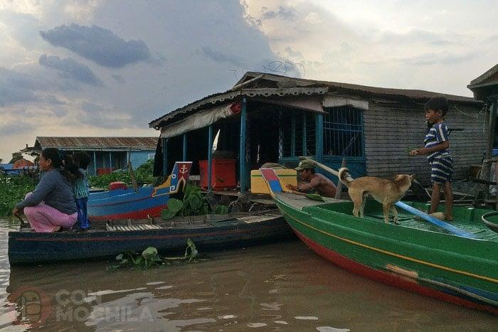 Los animales también viven aquí