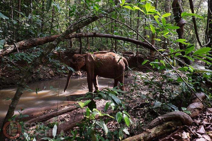 Un elefante extremadamente delgado en plena recuperación