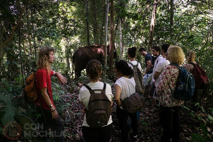 ¿Puede el turismo ayudar a los elefantes?