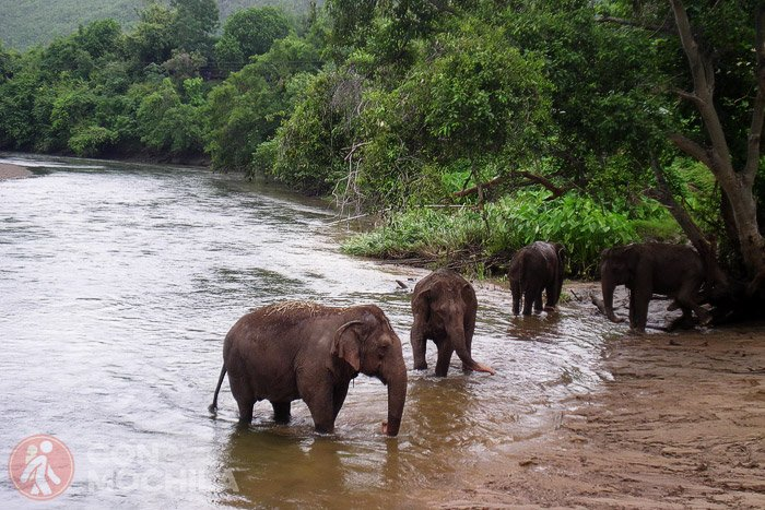 Elefantes en un santuario @FloriGreen