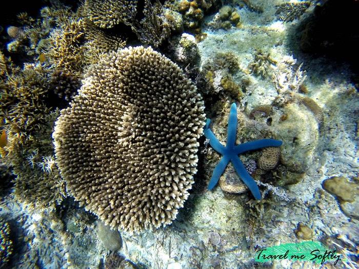Itinerario de viaje a Filipinas: Estrella de mar y coral, El Nido