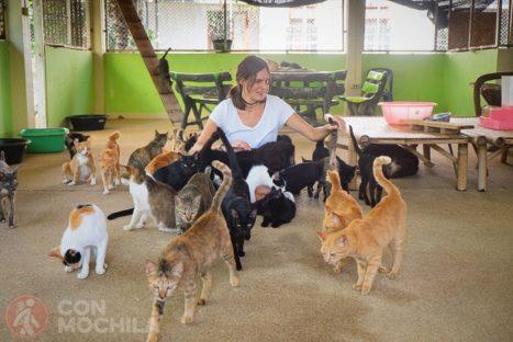 El refugio de gatos