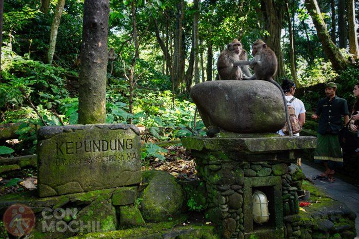 El Monkey Forest de Ubud