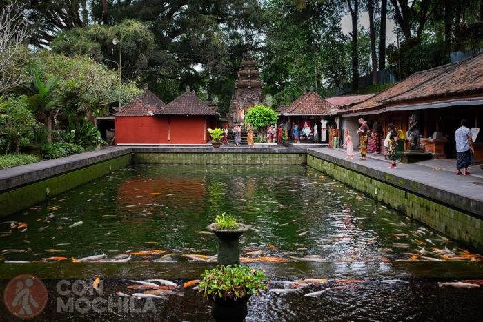 Otra de las piscinas con los famosos peces Koi