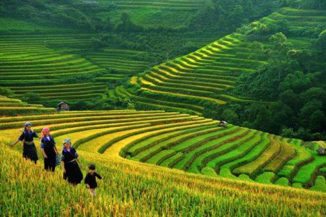 Paisaje en Sapa, Vietnam