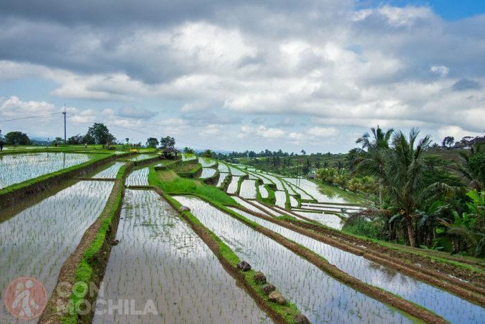 Detalle de las terrazas de arrozales
