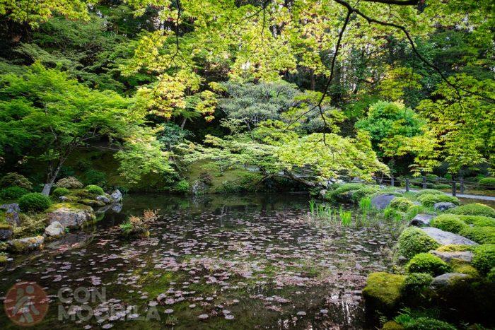 Un pequeño estanque
