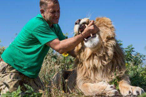 """""""Jugando"""" con un león"""