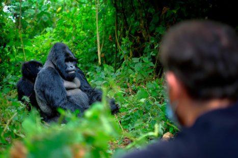 Encuentro entre turistas y gorilas