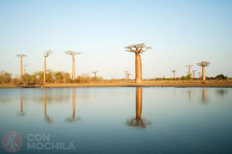 Los baobabs reflejados en el lago