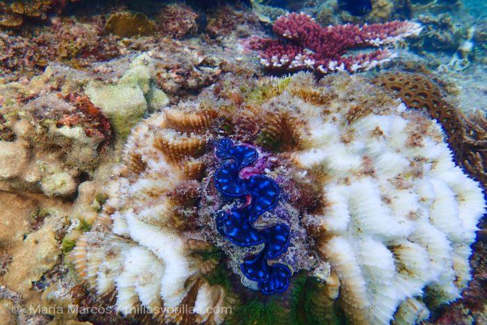 Se estima que en los últimos 30 años se ha perdido 50% de los corales del mundo. Foto tomada en la Isla de Redang.