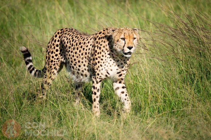 ¿Te vienes de safari?