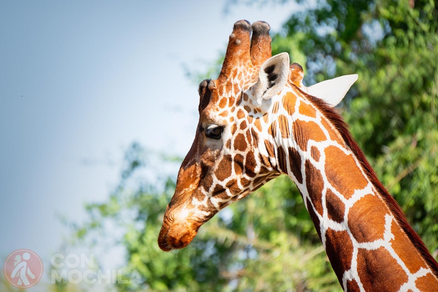 Bienvenidos a los parque de Samburu y Buffalo Springs