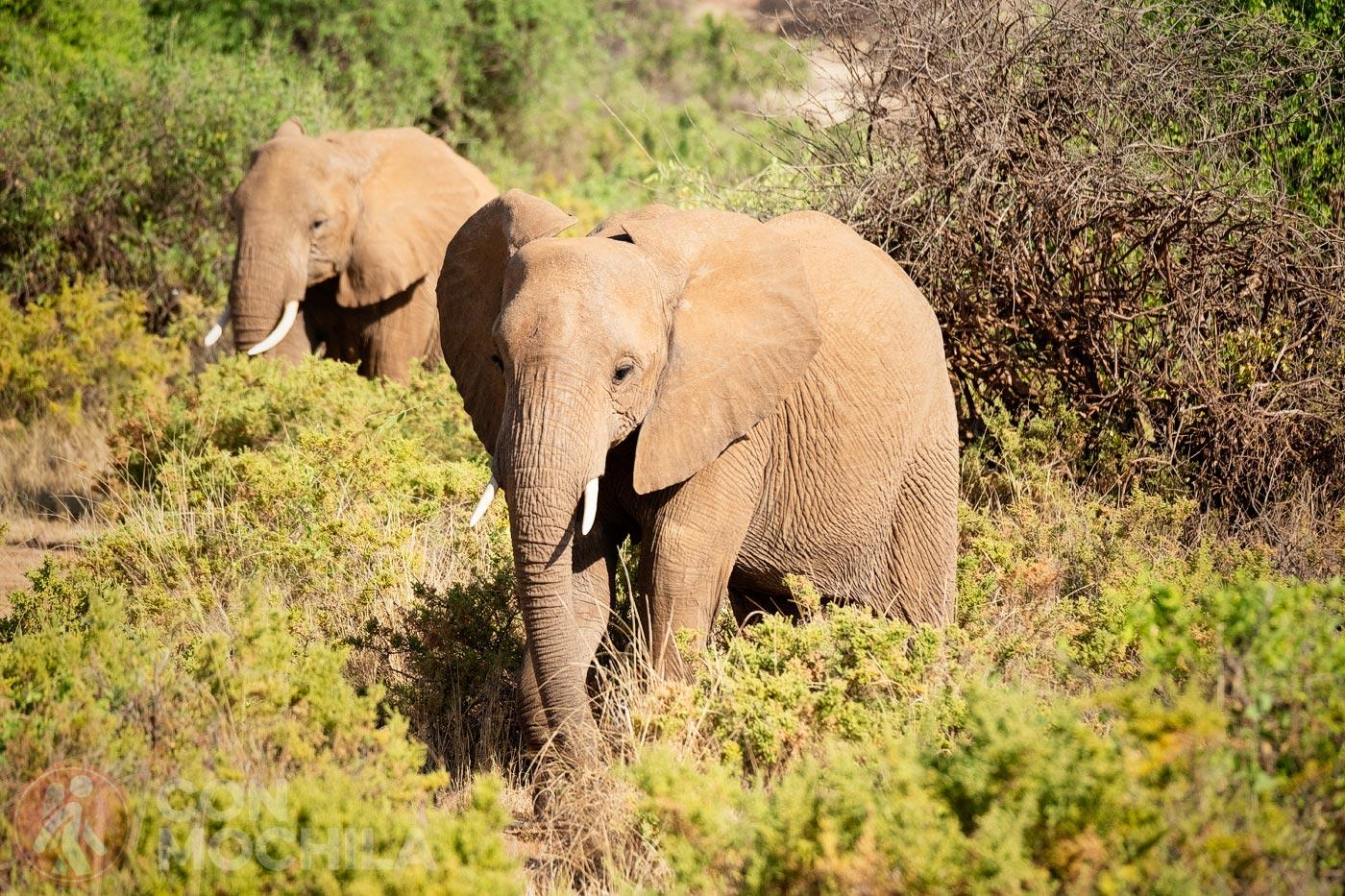 Los primeros elefantes
