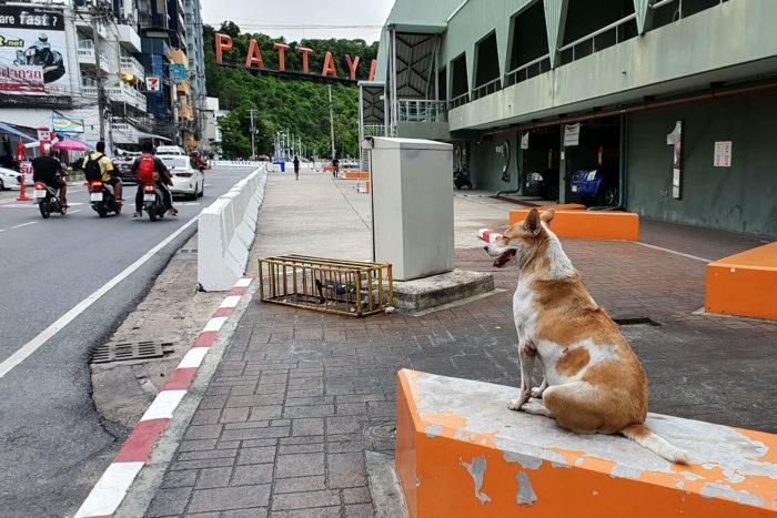 Pattaya Covid19