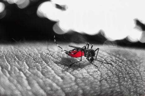 El mundo está viviendo otras epidemias, lo que pasa que no lo oímos tanto porque afectan a los países tropicales.