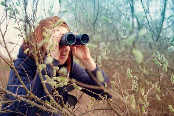 Buscando fauna salvaje